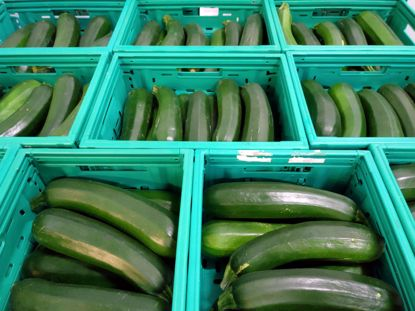 Picture of COURGETTES ORIG PT CAT I  KG